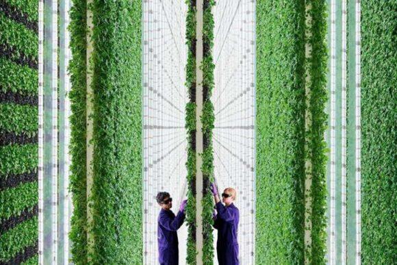 pionowe rolnictwo