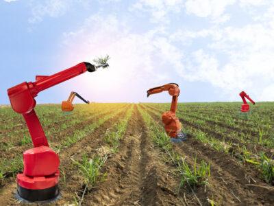 fot. Czy sztuczna inteligencja zastąpi rolników?